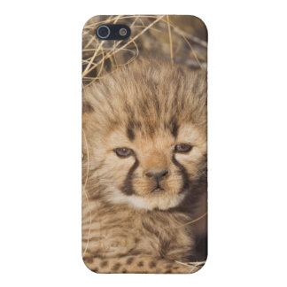 19 days old male cub. Namibia Cover For iPhone 5/5S
