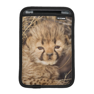 19 days old male cub. Namibia iPad Mini Sleeve