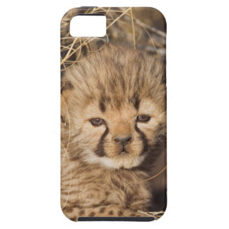 19 days old male cub. Namibia iPhone 5 Case