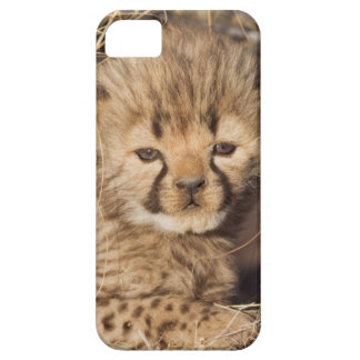 19 days old male cub. Namibia iPhone 5 Cover