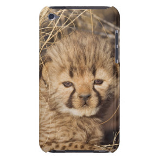 19 days old male cub. Namibia iPod Touch Cover