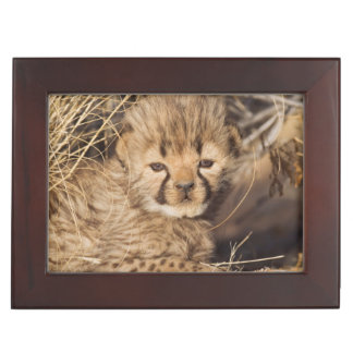 19 days old male cub. Namibia Keepsake Box