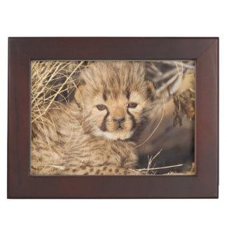 19 days old male cub. Namibia Keepsake Boxes