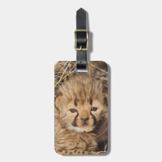 19 days old male cub. Namibia Luggage Tag