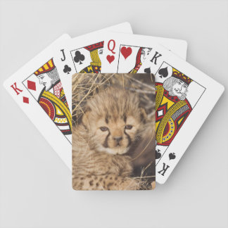 19 days old male cub. Namibia Playing Cards