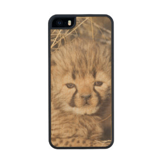 19 days old male cub. Namibia Wood iPhone SE/5/5s Case