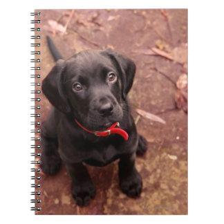 19 Week Old Black Lab Notebook