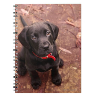 19 Week Old Black Lab Spiral Notebook