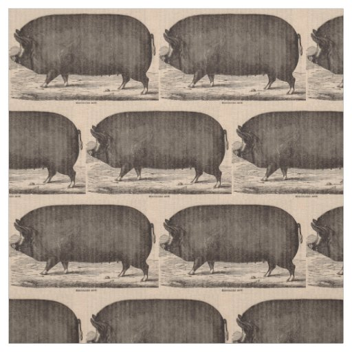 19th century farm animal print Berkshire sow pig