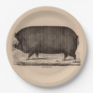 19th century farm animal print Berkshire sow pig Paper Plate