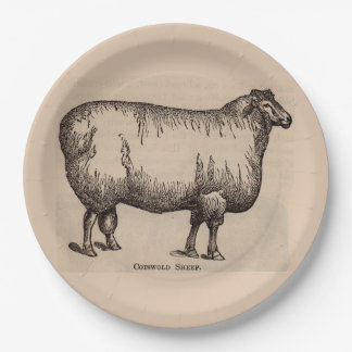 19th century print Cotswold sheep Paper Plate
