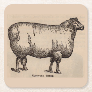 19th century print Cotswold sheep Square Paper Coaster