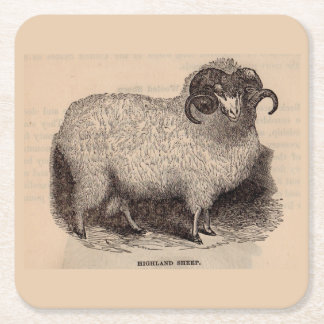 19th century print Highland sheep Square Paper Coaster