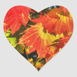 "1.5"" Vibrant vine maple in fall heart sticker"