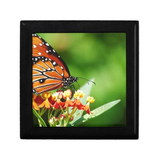 1-backyard-butterflies-10-12-091.jpg trinket boxes