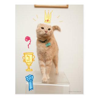 #1 Cat Postcard