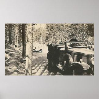 1 in 2 bears at car print
