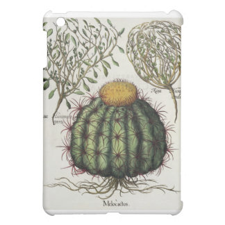 1.Melocactus; 2.Rosa Hiericontea aperta; 3.Rosa Hi Cover For The iPad Mini