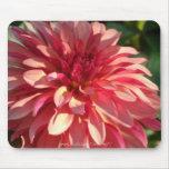 1 Starburst Pink Dahlia
