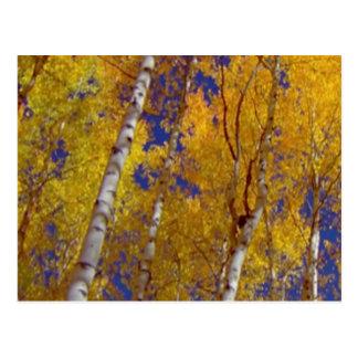 1 temp sq fall season postcard