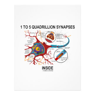 1 To 5 Quadrillion Synapses Inside Neuron Flyers