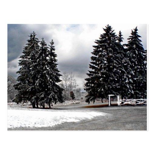 2008 NY Ice Storm Postcards