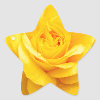 2015 (008).jpg star sticker