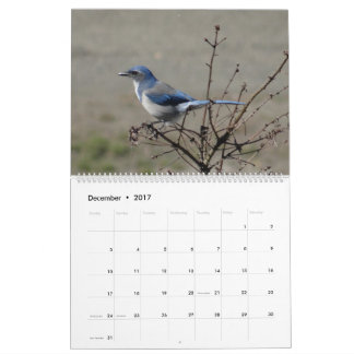 2017  Birds of North America Wall Calendar