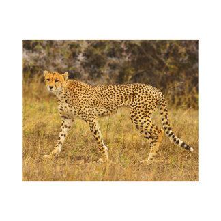 """20"""" x 16"""" Cheetah in the grass  Canvas print"""