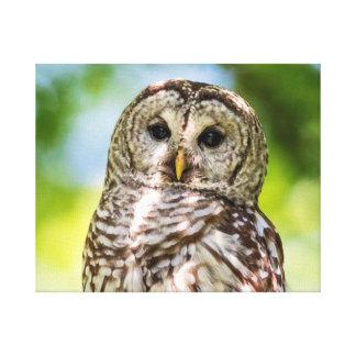20x16 Barred Owl Canvas Print