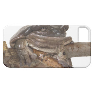 23568138 BARELY THERE iPhone 5 CASE
