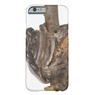 23568138 BARELY THERE iPhone 6 CASE