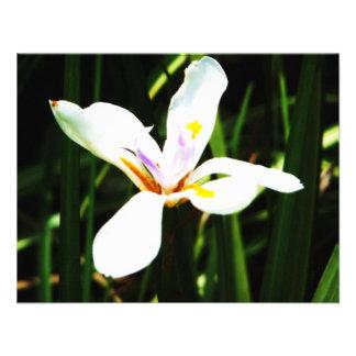 235 white flower lilly art print custom invitation