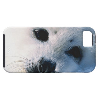 23872544 iPhone 5 COVERS