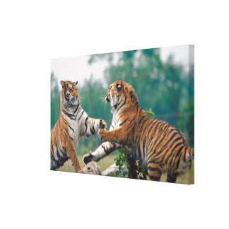 23899157 GALLERY WRAPPED CANVAS