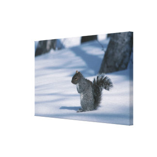 23936348 STRETCHED CANVAS PRINTS