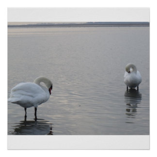 """23""""x23"""" Photo Print of two swans, by the lake"""