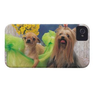 24095240 iPhone 4 CASES