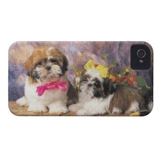 24095243 iPhone 4 Case-Mate CASE