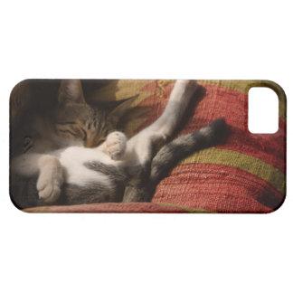 24140641 iPhone 5 CASES