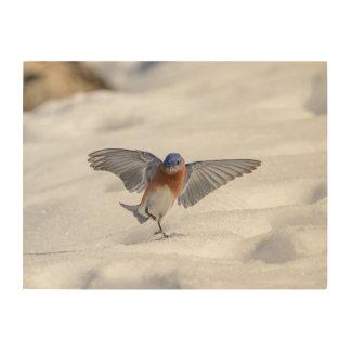 24x18 Eastern Bluebird dancing in the snow Wood Print
