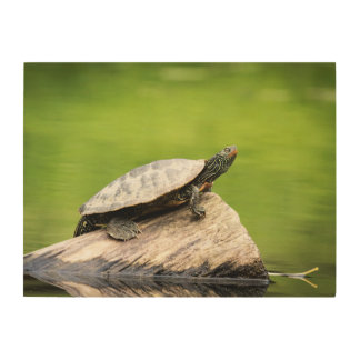 24x18 Painted turtle on a log Wood Wall Art