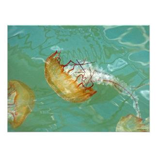 24X18 Sea Nettle Jellyfish Photo