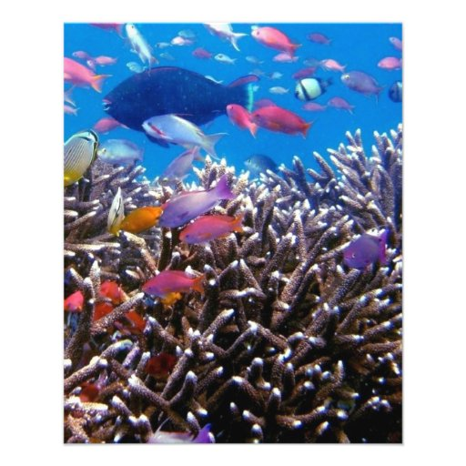 256563 TROPICAL COLORFUL FISH SEALIFE OCEAN CORAL PERSONALIZED FLYER