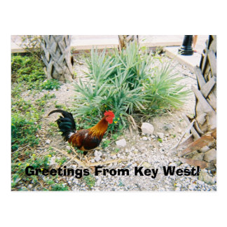 2-12-2007 (2)-07, Greetings From Key West! Postcard