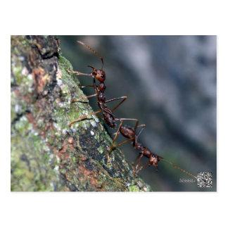 2 Ants Postcard