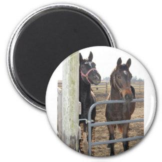 2 Barn Horses Magnets