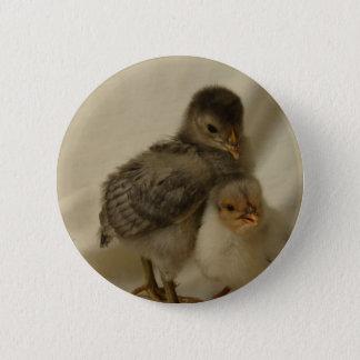 2 Blue/Gray Chicks 6 Cm Round Badge