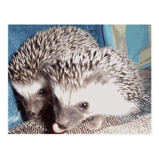 2 cute hedgehogs postcard