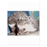 2 cute hedgehogs postcard